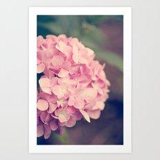 Pink Hydrandgeas Art Print