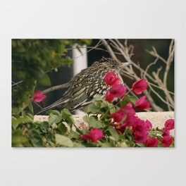 All Puffed Up Road Runner Canvas Print