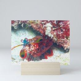 Mantis Shrimp peeking out Mini Art Print