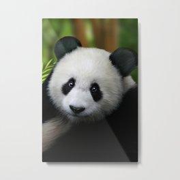 Giant Panda Cub Metal Print