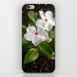 Perfect Dewdrops iPhone Skin
