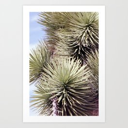 Joshua Tree 35mm Film Art Print