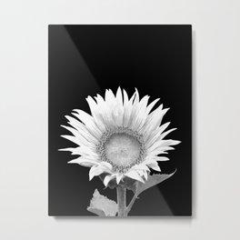 White Sunflower Black Background Metal Print