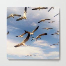 A Frenzy of Seagulls Metal Print