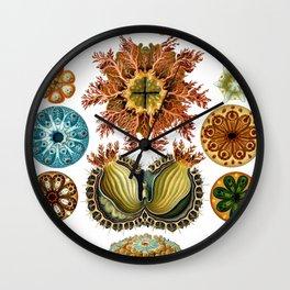 Ernst Haeckel Ascidiae Sea Squirts White Background Wall Clock
