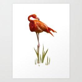 The Florida Flamingo Art Print