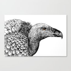 White-backed Vulture Canvas Print