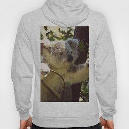 Sweet Koala Baby Hoody