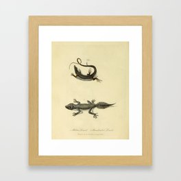 """""""Ribbon Lizard and Broad-Tailed Lizard"""" by Sarah Stone, 1790 Framed Art Print"""