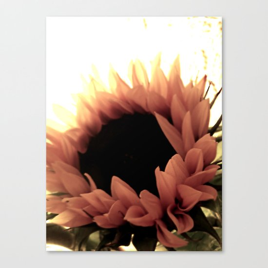 soft as pink Canvas Print