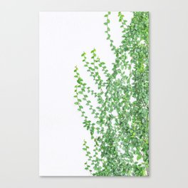 Green creepers climbing the wall Canvas Print