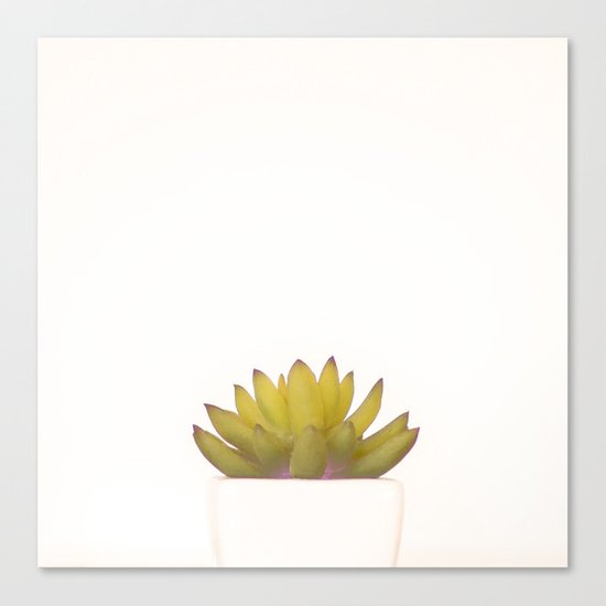 Cactus in flower pot on white background Canvas Print