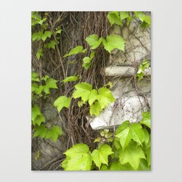 Climbing Vines  Canvas Print