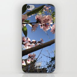 May Flower Blossom iPhone Skin
