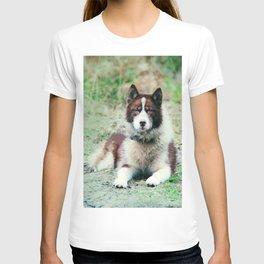 Greenland Dog T-shirt