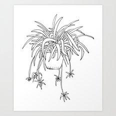 Spiderplant Art Print