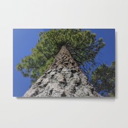 The Mighty Pine Tree Metal Print