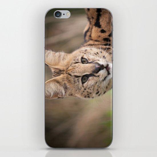 Serval Cat iPhone & iPod Skin