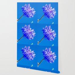 Blue fresh cornflower on the blue background Wallpaper