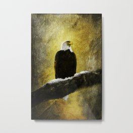 Bald Eagle on Snow Covered branch ~ Ginkelmier Inspired Metal Print