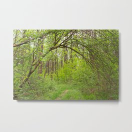 Forest Arch Trail Metal Print