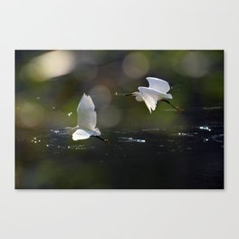 White Herons Flying Canvas Print