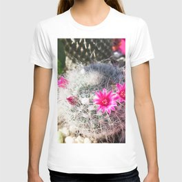 cactus in the desert with beautiful blooming pink flower T-shirt