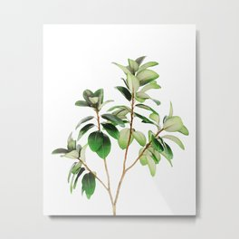 Indian Rubber Tree Metal Print