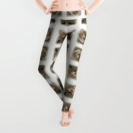 Denali - Loyal Lap-Dog Leggings