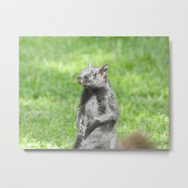 Squirrely Intentions Metal Print