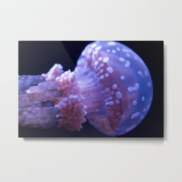Baby Jellyfish (Underwater Photography) Metal Print
