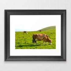Cow Field Framed Art Print