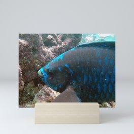 Midnight Blue Parrot Fish Mini Art Print