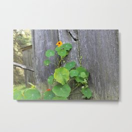 The Garden Wall Metal Print