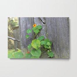 The Garden Wall Metal Print