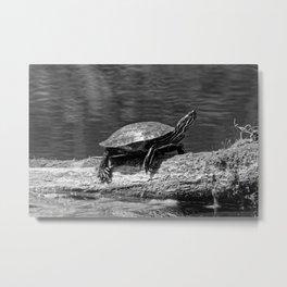 Painted Turtle on a Log (B&W) Metal Print