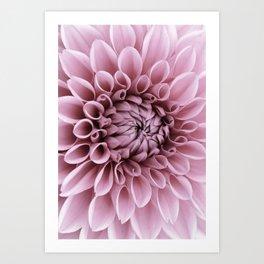 #pink #flower Art Print