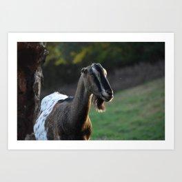 Pippin the Goat Art Print
