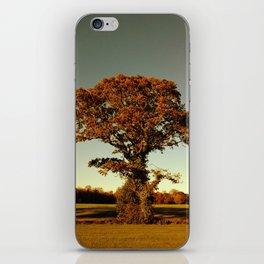 Tree- Malahide Park iPhone Skin