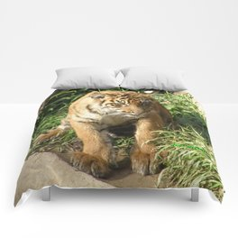 Young Tiger Comforters