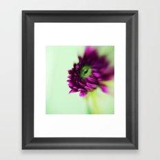 Dahlia Bud Framed Art Print