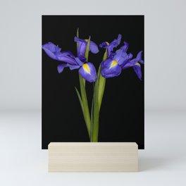 Pretty Iris Mini Art Print