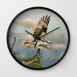 Osprey with nesting material Wall Clock