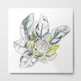 Cauliflower Study I  Metal Print