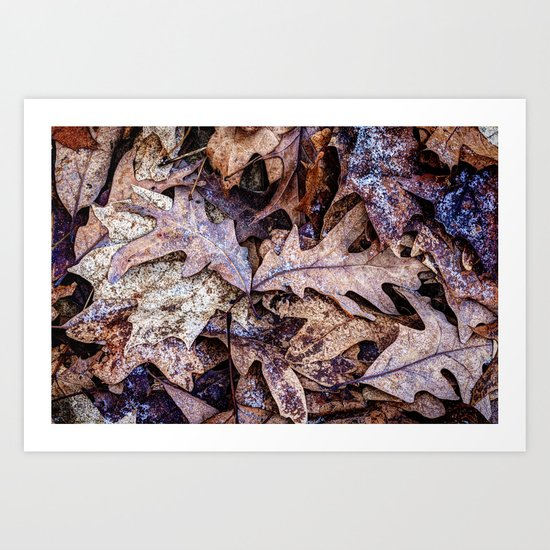 fallen and frosted Art Print