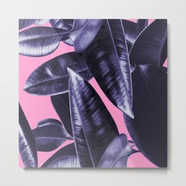 Rubber Plant Pink Metal Print