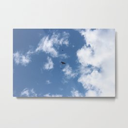 Song Birds Fighting off a Red Tailed Hawk Metal Print