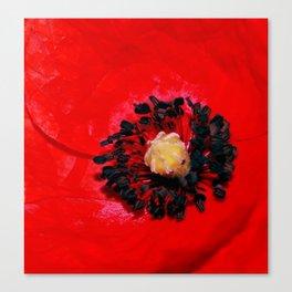 Poppy's Dream Canvas Print