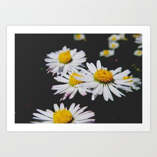 Daisies #1 Art Print