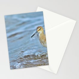 Wading Willet Stationery Cards